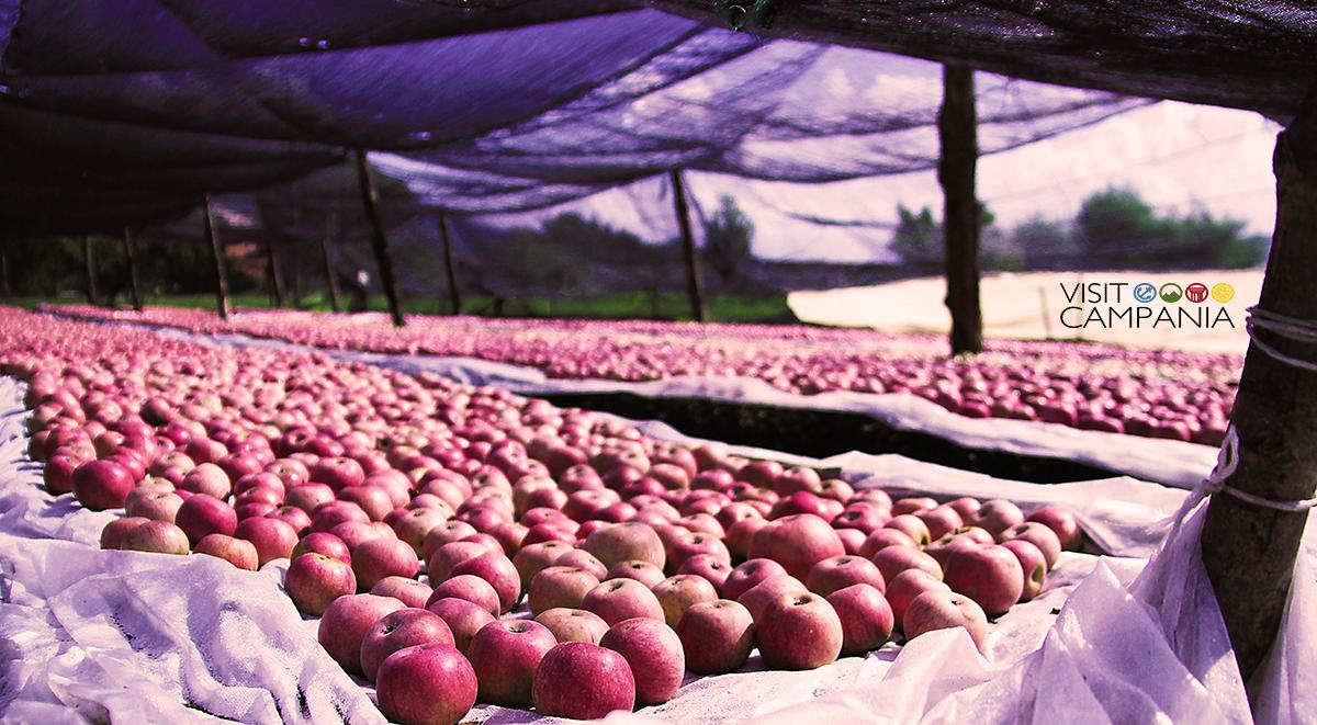 il tempo delle mele annurche