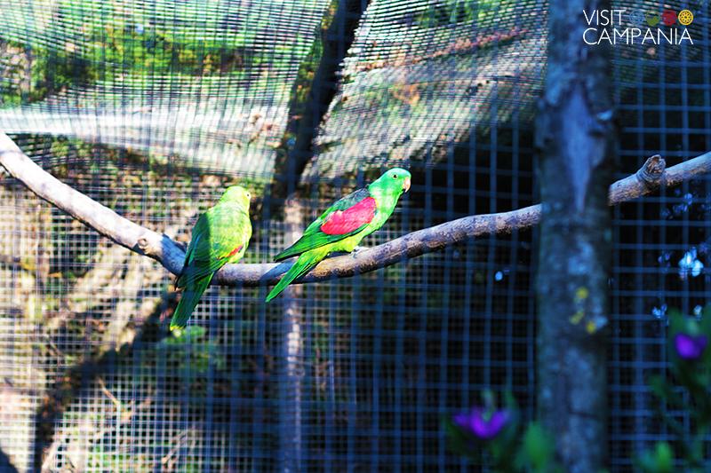 giardino segreto airola pappagalli