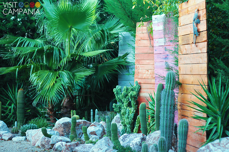 giardino segreto airola piante cactacee