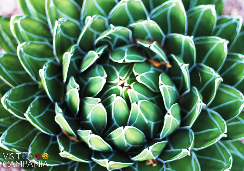 giardino segreto airola piante succulente