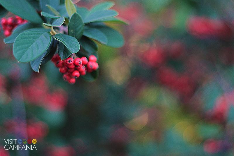 giardino segreto airola piante